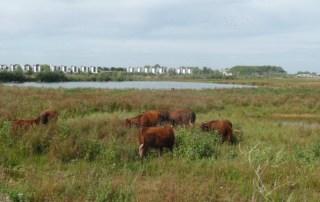 Foto van het kanaalpark in Rosmalen
